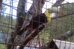 Oscar the toucan, mascot at El Oasis